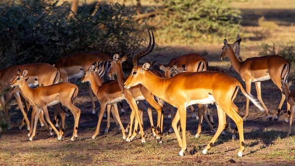 Serengeti N.P. Kusini (27) - TANZANIA - François Scheffen Photography
