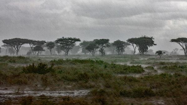 Serengeti N.P. Kusini (29) - TANZANIA - François Scheffen Photography