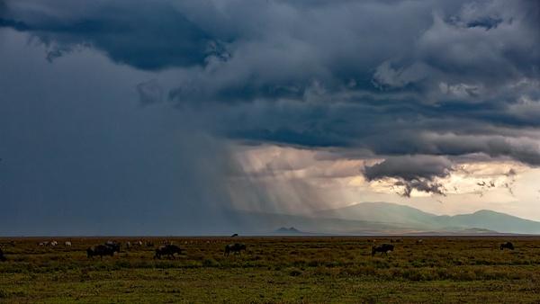 Serengeti N.P. Kusini (30) - TANZANIA - François Scheffen Photography