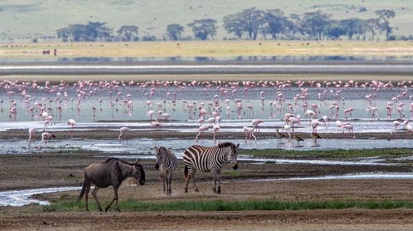 Ngorongoro Crater (5) - TANZANIA - François Scheffen Photography