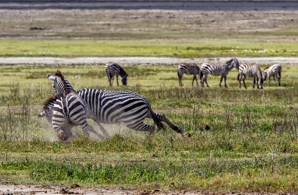 Ngorongoro Crater (2) - TANZANIA - François Scheffen Photography