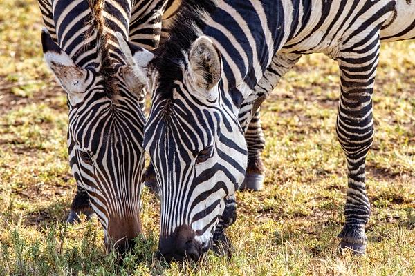 Ngorongoro Crater (1) - TANZANIA - François Scheffen Photography