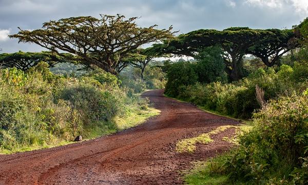 Ngorongoro Crater (15) - TANZANIA - François Scheffen Photography