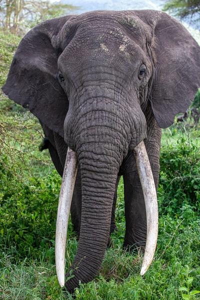 Ngorongoro Crater (18) - TANZANIA - François Scheffen Photography
