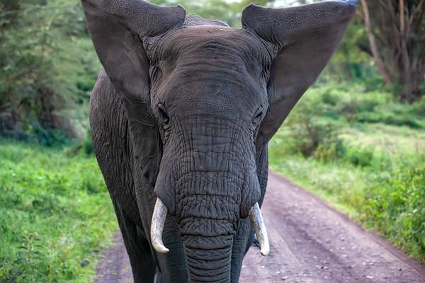 Ngorongoro Crater (20) - TANZANIA - François Scheffen Photography