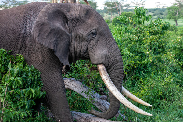 Ngorongoro Crater (21) - TANZANIA - François Scheffen Photography