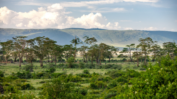 Ngorongoro Crater (22) - TANZANIA - François Scheffen Photography