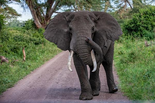 Ngorongoro Crater (23) - TANZANIA - François Scheffen Photography