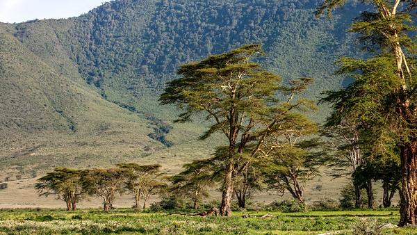 Ngorongoro Crater (24) - TANZANIA - François Scheffen Photography