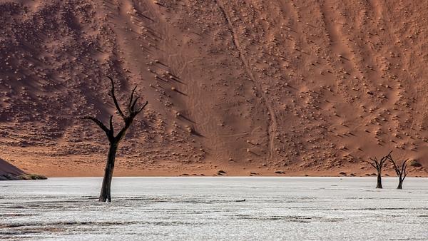 1. Sossusvlei- Deadvlei (14) - NAMIBIA - François Scheffen Photography