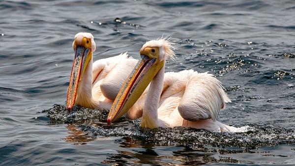 3. Swakopmund & Walvis Bay  (2) - NAMIBIA - François Scheffen Photography
