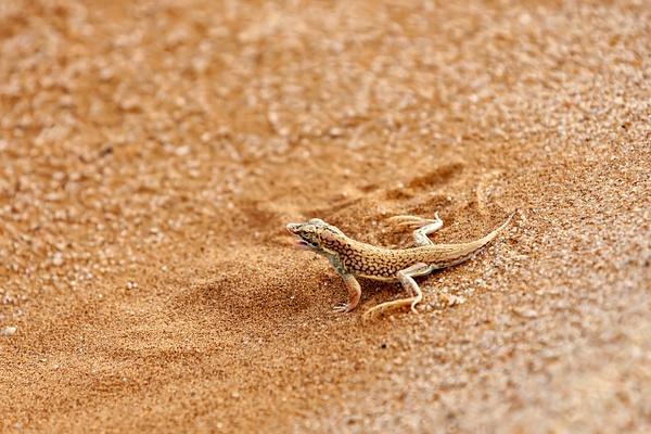 3. Swakopmund & Walvis Bay  (5) - NAMIBIA - François Scheffen Photography
