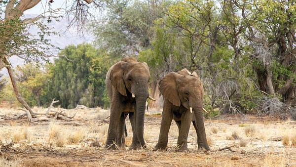 4. Damaraland (4) - NAMIBIA - François Scheffen Photography