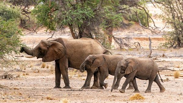 4. Damaraland (5) - NAMIBIA - François Scheffen Photography
