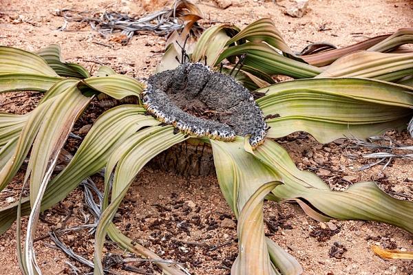 3. Swakopmund & Walvis Bay  (15) - NAMIBIA - François Scheffen Photography