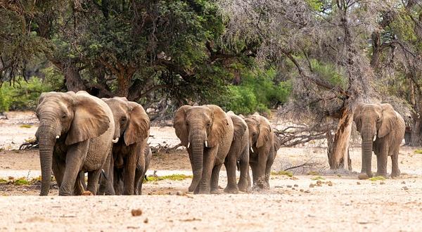 4. Damaraland (6) - NAMIBIA - François Scheffen Photography
