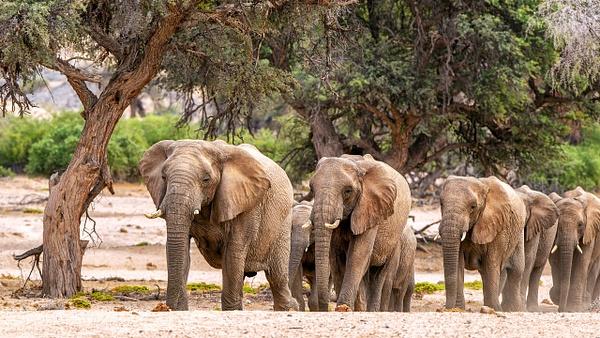 4. Damaraland (7) - NAMIBIA - François Scheffen Photography