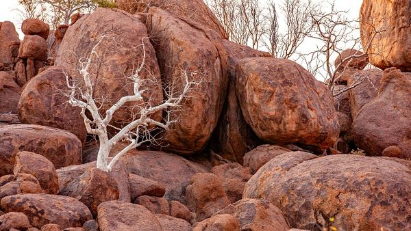 4. Damaraland (23) - NAMIBIA - François Scheffen Photography