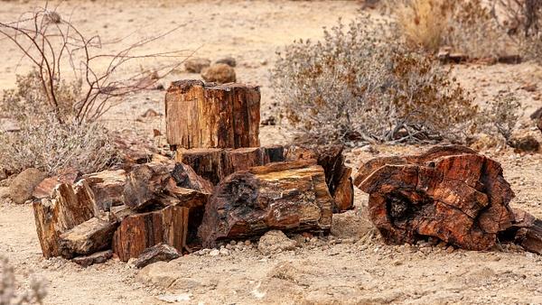 4. Damaraland (26) - NAMIBIA - François Scheffen Photography