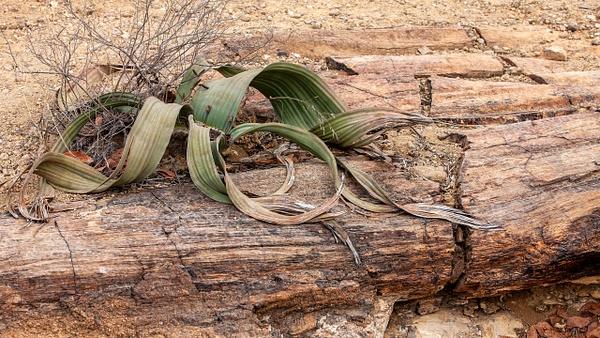 4. Damaraland (25) - NAMIBIA - François Scheffen Photography