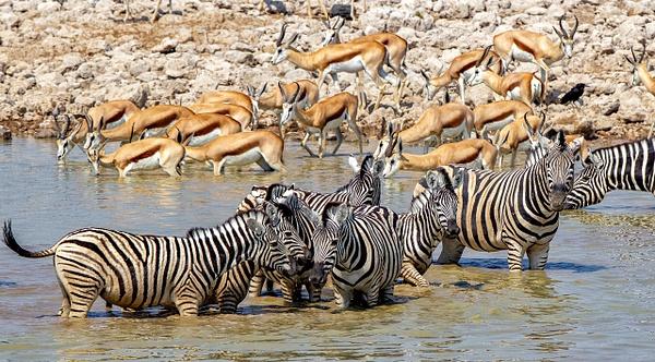 5. Etosha Pan (1) - NAMIBIA - François Scheffen Photography