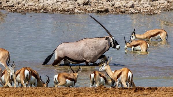 5. Etosha Pan (2) - NAMIBIA - François Scheffen Photography