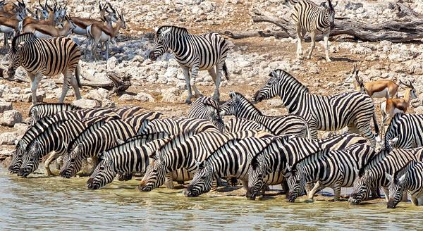 5. Etosha Pan (3) - NAMIBIA - François Scheffen Photography