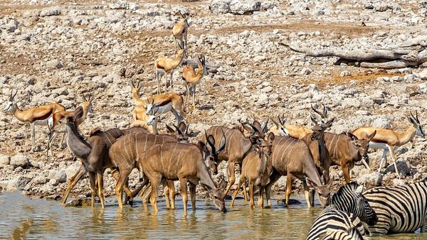 5. Etosha Pan (4) - NAMIBIA - François Scheffen Photography