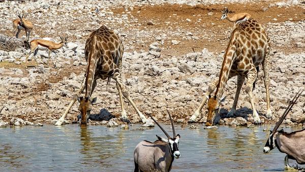 5. Etosha Pan (6) - NAMIBIA - François Scheffen Photography