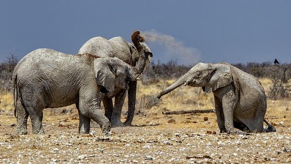 5. Etosha Pan (9) - NAMIBIA - François Scheffen Photography