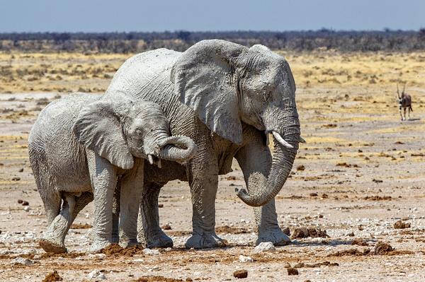 5. Etosha Pan (7) - NAMIBIA - François Scheffen Photography