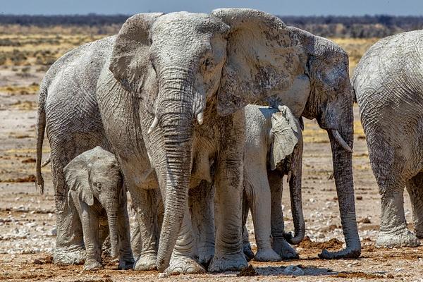 5. Etosha Pan (8) - NAMIBIA - François Scheffen Photography