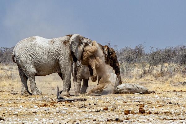 5. Etosha Pan (10) - NAMIBIA - François Scheffen Photography