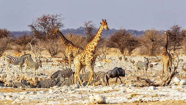 5. Etosha Pan (15) - NAMIBIA - François Scheffen Photography