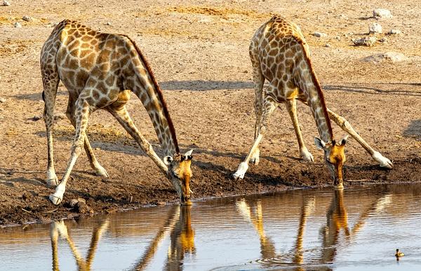 5. Etosha Pan (24) - NAMIBIA - François Scheffen Photography