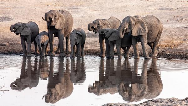 5. Etosha Pan (26) - NAMIBIA - François Scheffen Photography