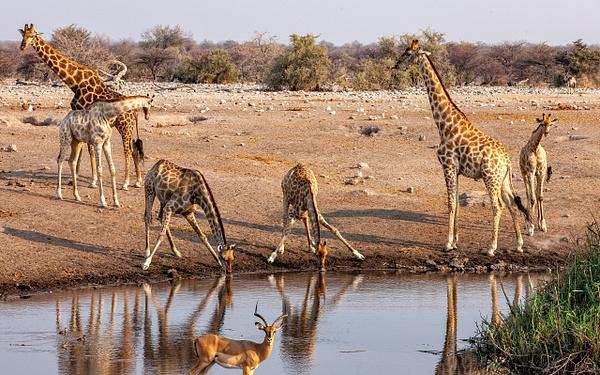 5. Etosha Pan (25) - NAMIBIA - François Scheffen Photography