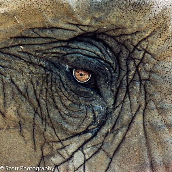 Serious Eye Wrinkles - Home - PhotographyScott