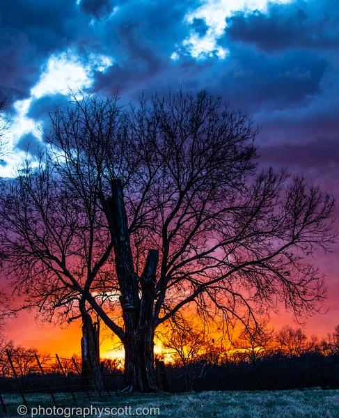 Stormy Tree - Golden Hours - PhotographyScott