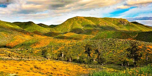 DSC05100 - Landscape - Cyril Belarmino Photography
