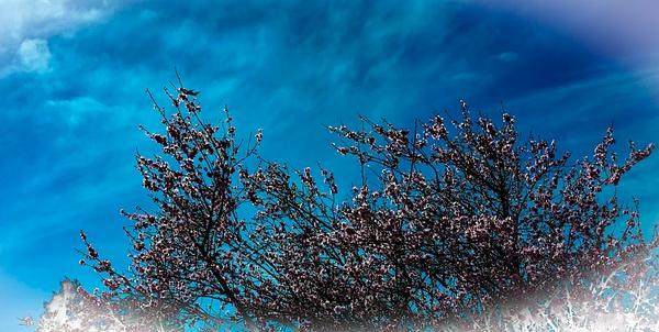 DSC01796 - Home - Cyril Belarmino Photography