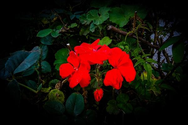 DSC02287 - Home - Cyril Belarmino Photography