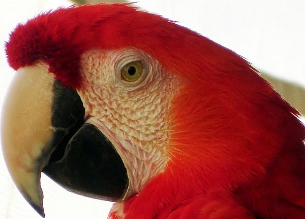 San Diego wild animal Park-015 - Animals - Cyril Belarmino Photography