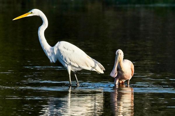 Fishing Buddies - Nature - Phil Mason Photography