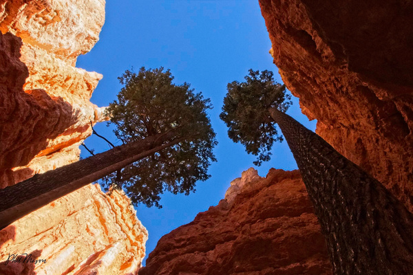 Bryce View 4 - Landscapes - Phil Mason Photography