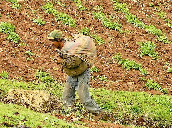 Potato Harvest - Home - Phil Mason Photography