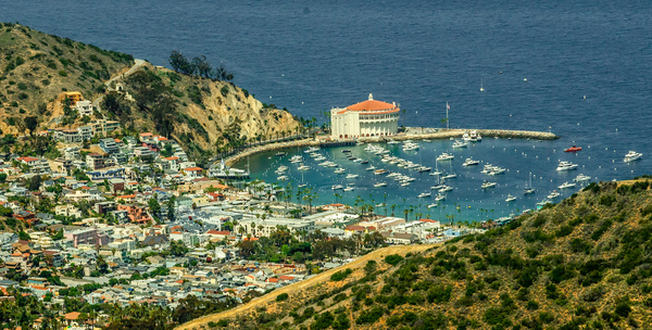 Catalina Island - Portfolio - Neil Sims Photography