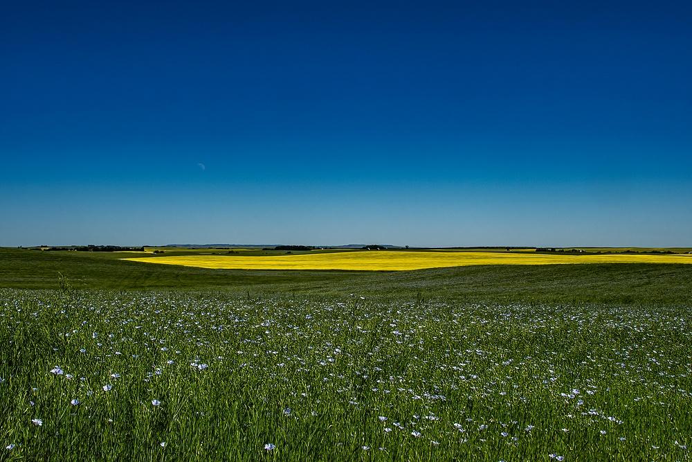 Ganola-Flax Field_DSC_1708