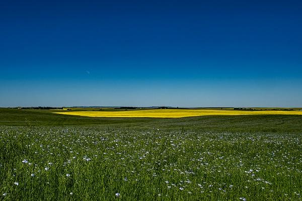 Ganola-Flax Field_DSC_1708 - Home - Walter Nussbaumer Photography