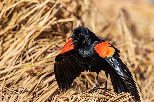 RWBB_R8A8125 - Birds - Walter Nussbaumer Photography